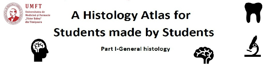 A Histology Atlas for Students made by Students